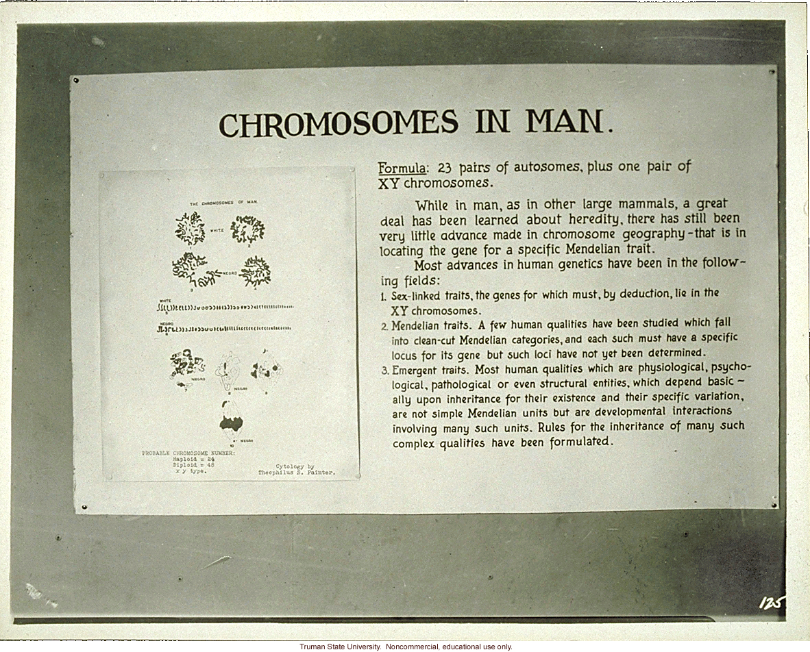 T. S. Painter's exhibit &quote;Chromosomes in man,&quote; 3rd International Eugenics Conference