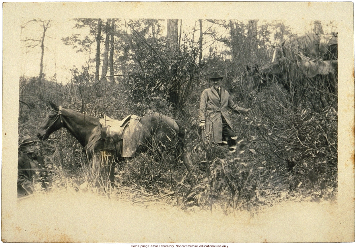 Charles B. Davenport doing fieldwork in Leslie County, Kentucky