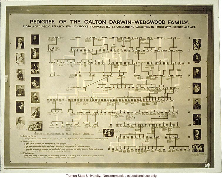 &quote;Pedigree of Galton-Darwin-Wedgwood family,&quote; 3rd International Eugenics Conference