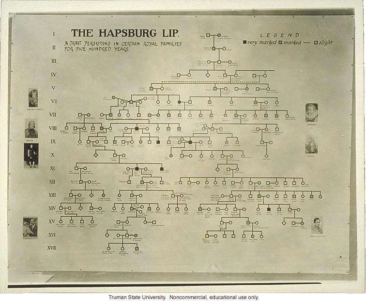 Pedigree exhibit: &quote;The Hapsburg lip,&quote; 3rd International Eugenics Conference