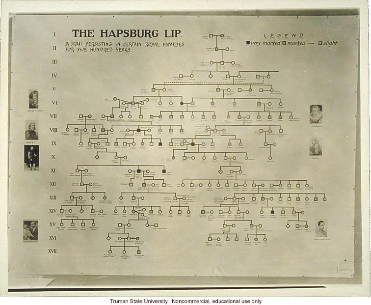 Pedigree exhibit: &quote;The Hapsburg lip,&quote; 3rd International Eugenics Conference