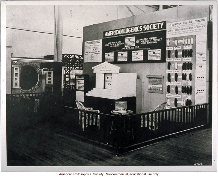 American Eugenics Society exhibit at Sesquicentennial Exposition, Philadelphia (&quote;Mendel's theater,&quote; center; guinea pig coat color, right)
