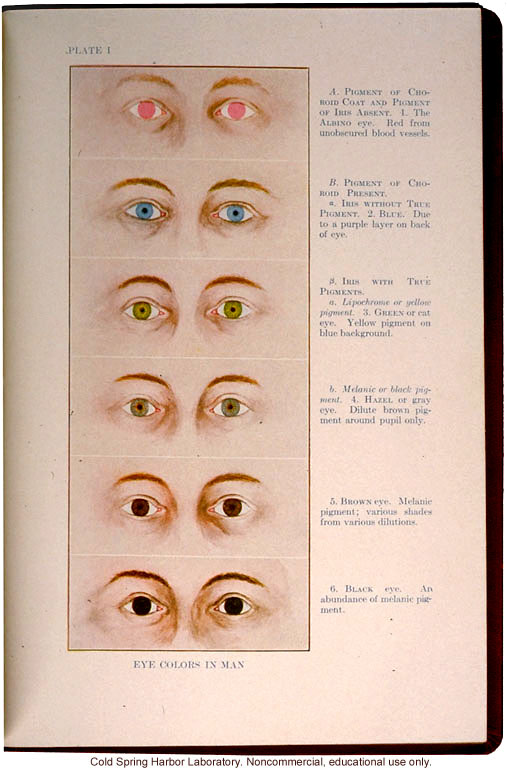 &quote;Eye Colors in Man,&quote; from The Trait Book, ERO Bulliten No. 6, by Charles B. Davenport