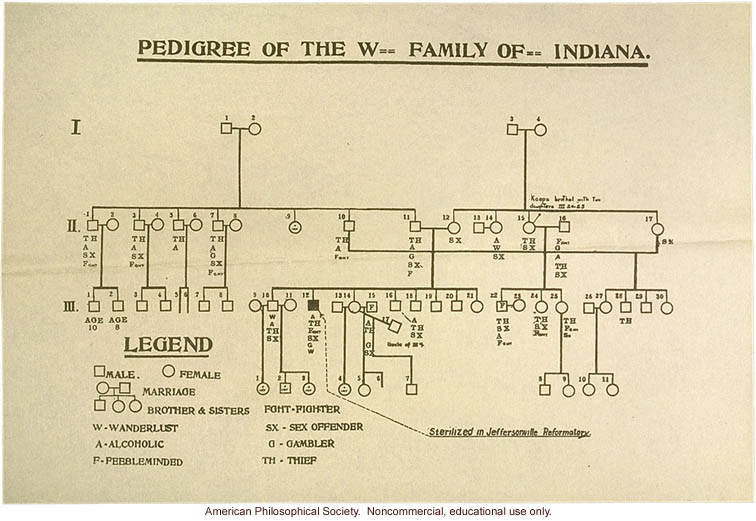 Pedigree of the W-- family of Indiana, a degenerate family in which one member was sterilized
