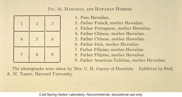 &quote;Hawaiian, and Hawaiian hybrids&quote;