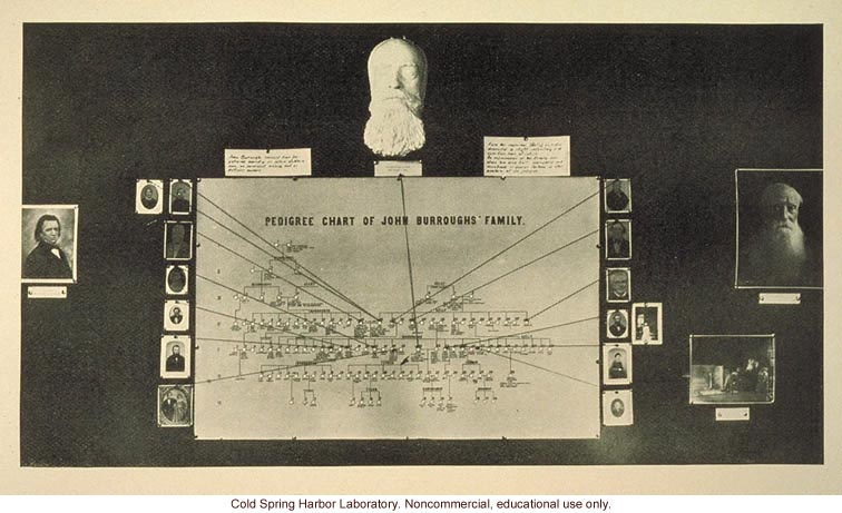&quote;Pedigree chart of John Burroughs' family&quote;