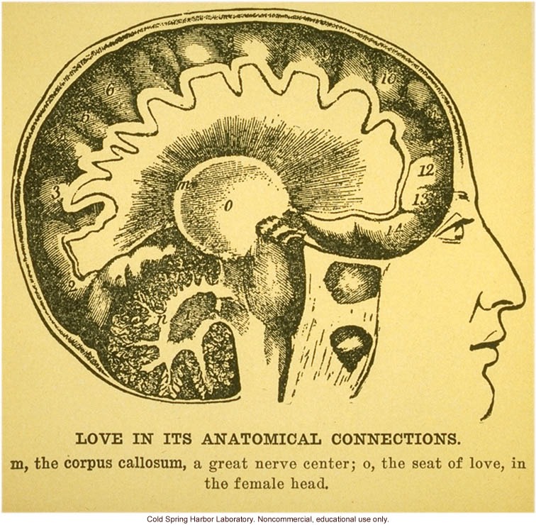 &quote;Love in its anatomical connections&quote;