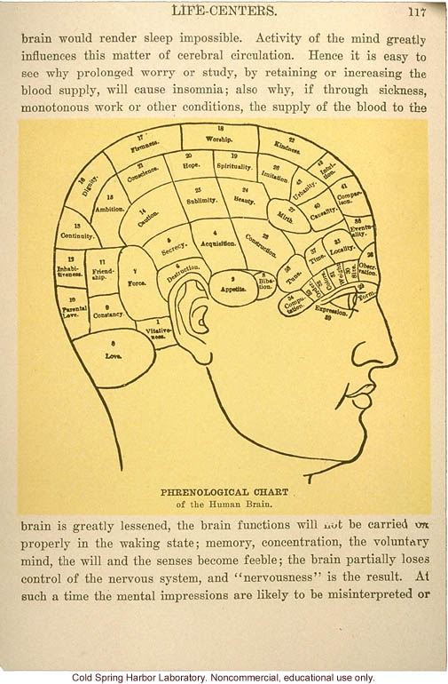 &quote;Phrenological chart of the human brain&quote;
