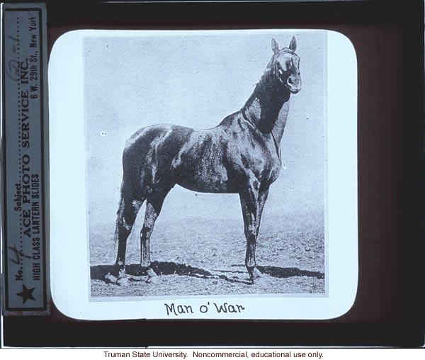Man O' War, about horse genetics