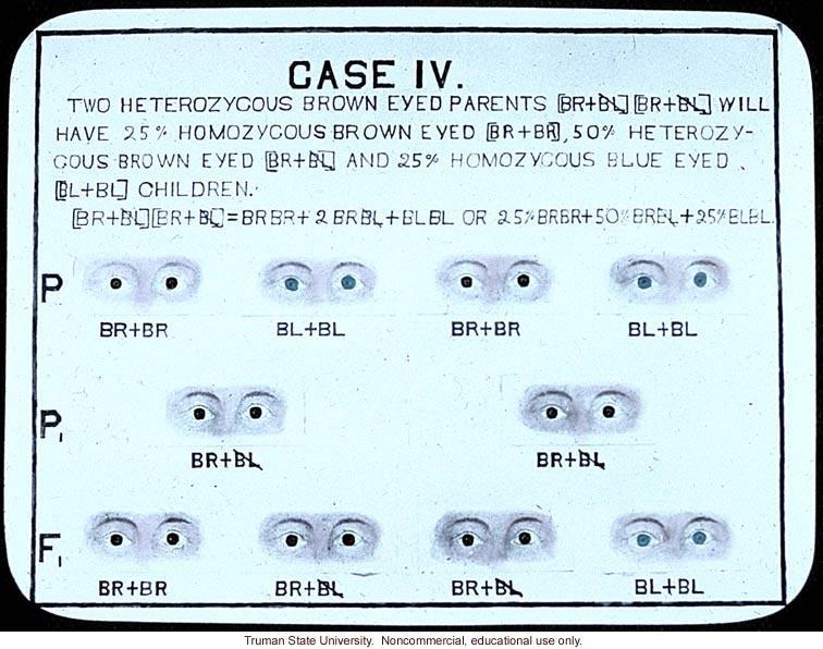 &quote;Case IV: two heterozygous brown eyed parents will have 25% homozgyous brown eyed, 50% heterozygous brown eyed and 25% homozygous blue eyed children&quote;